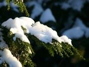 Зима вступила в свои права