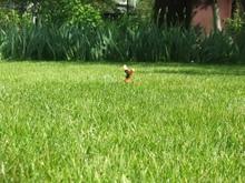 Система полива моего газона проста: шланг и дождеватель