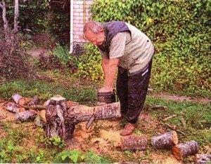 Чем крупнее дерево, тем мощнее его корневая система