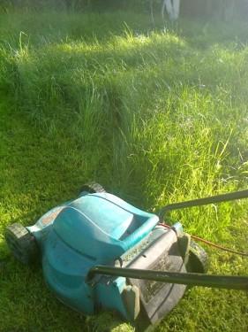 Высокая газонная трава