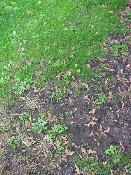 Реставрация старого газона. Вопросы читателей блога.