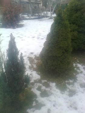 gazon zimoy