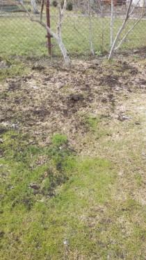 компост на газоне