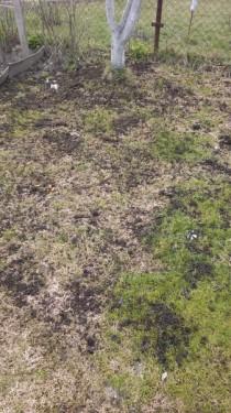 удобрение газона компостом