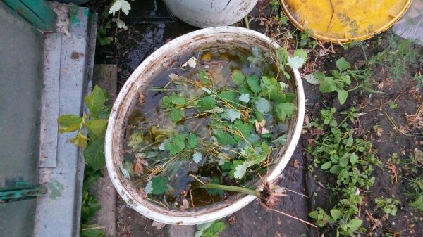 Подкормка газона органическими домашними удобрениями.
