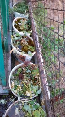 organicheskoe udobrenie dlya gazona