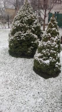 gazon zimoy 5