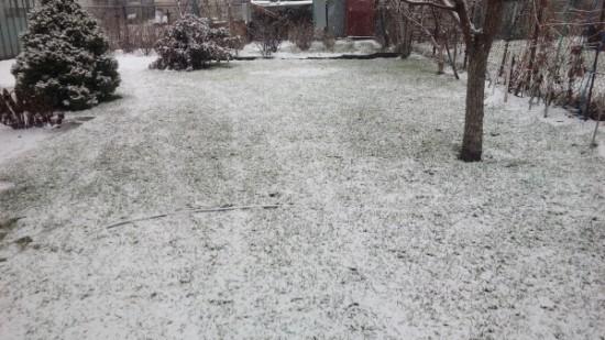 Первый снег на газоне.