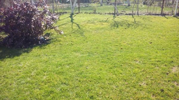 Мой весенний газон. Фотоотчет 2016.