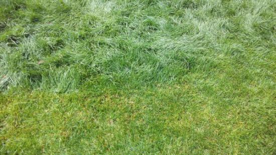 Косим переросший газон