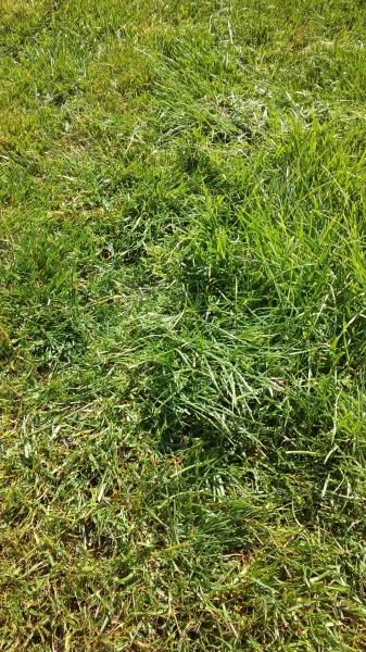 Весенний газон
