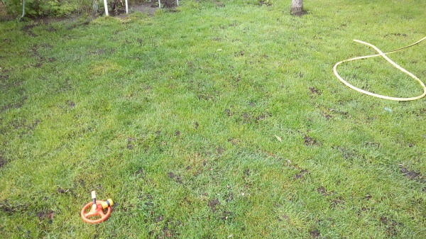 подкормка газона компостом