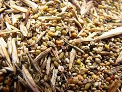 Травяные смеси для газонов