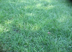 Мой осенний газон
