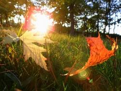 Последние теплые лучики солнца.