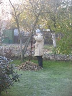 Моя супруга за уборкой газона
