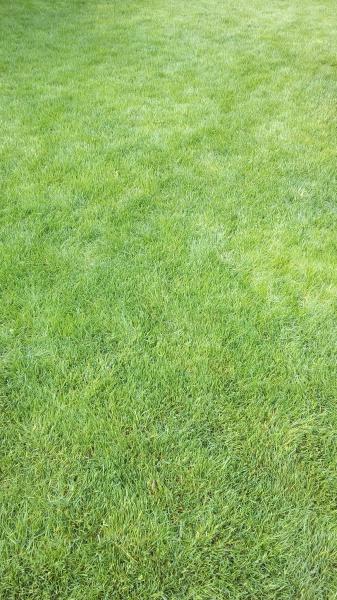 Первая стрижка газона весной.