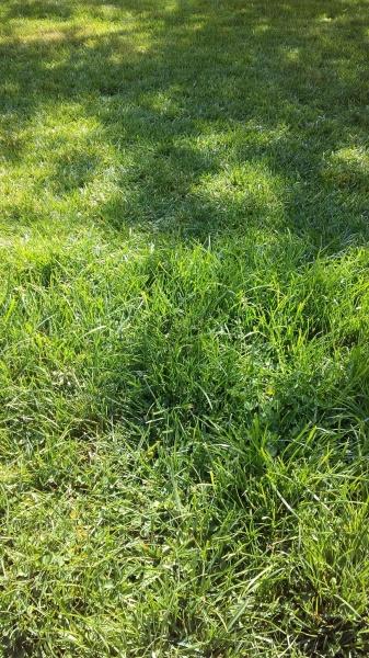 Стрижка газона в мае.